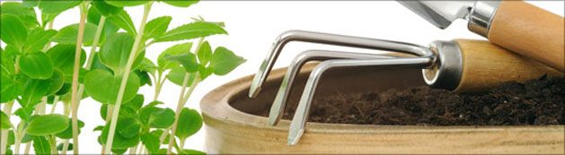 picture of gardening tools and seedling