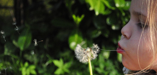 child blowing a dandelion
