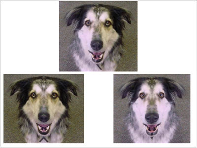 sample face activity done with dog